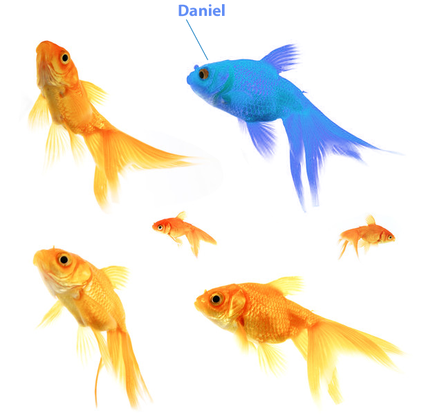 Image of goldfish symbolising personalisation