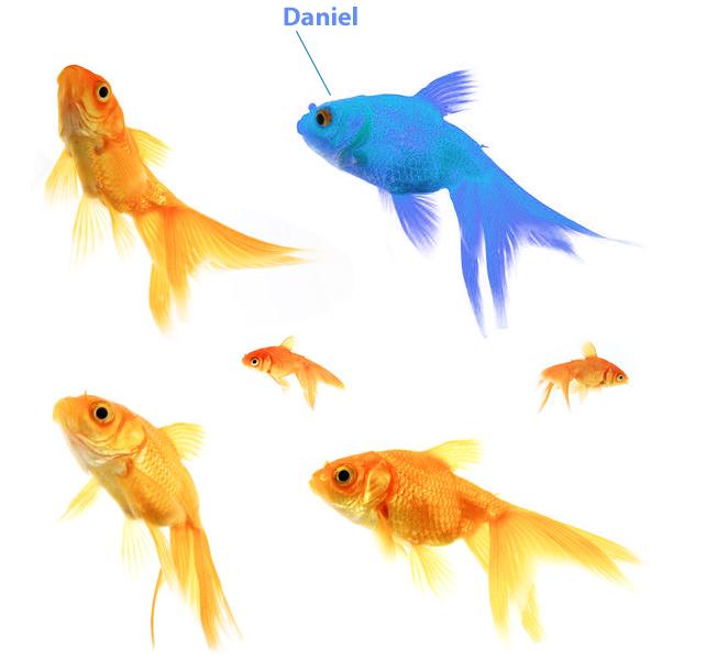 Image of goldfish symbolising personalisation